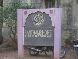 Vidéo  : Ranthambore Park – safari + bouffe de FEU